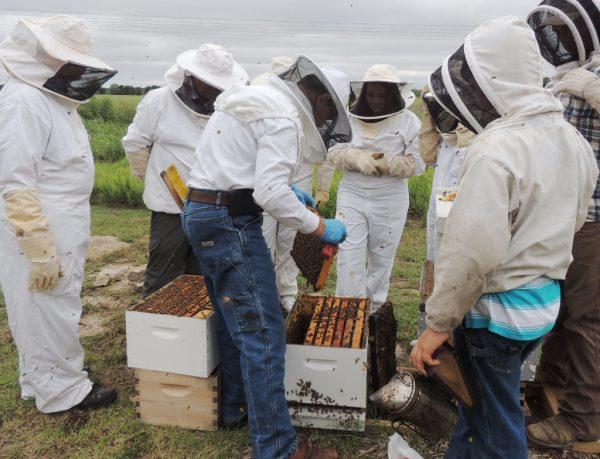 Examining the hive